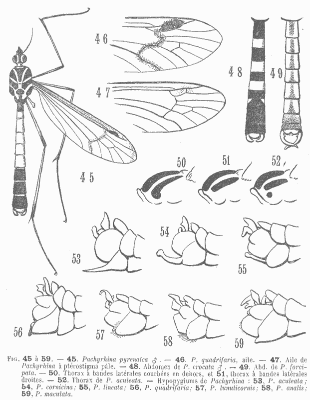 Illustration anatomie d'insecte