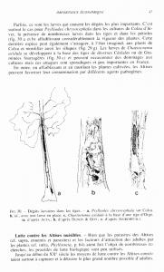 Illustration des généralités : écologie et éthologie