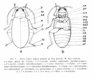 Illustration des généralités : anatomie